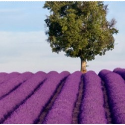 Helfe Rosmarin-Lavendelbad-1 l